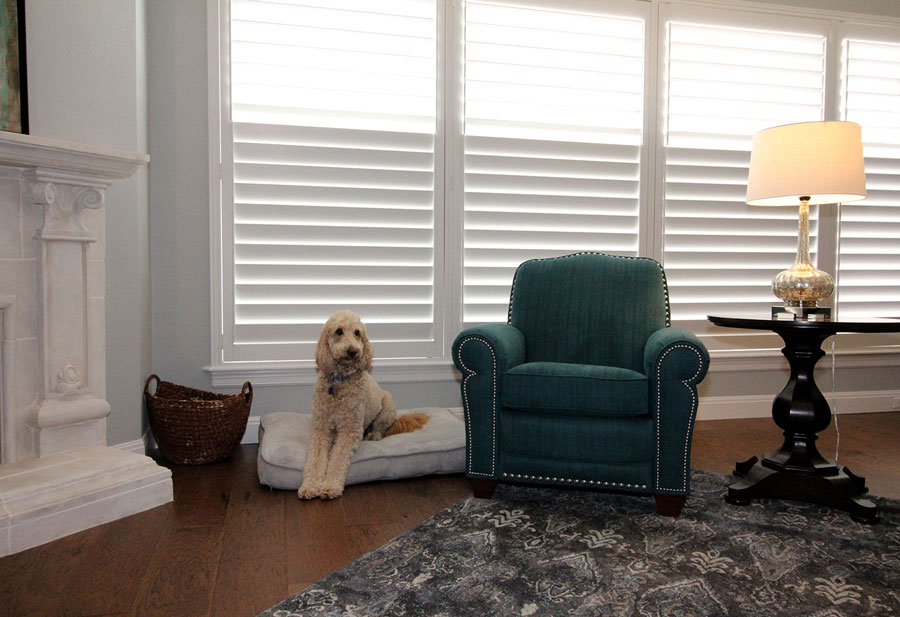 plantation shutters are pet friendly window coverings in San Antonio TX